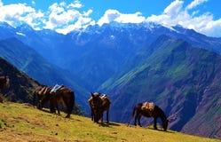 Andean Trekking. The Choquequirao Trek in Peru has breathtaking scenery stock photos