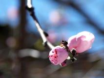 Andedräkt av våren Royaltyfri Fotografi