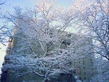 Andedräkt som tar snö dolda träd Arkivfoto
