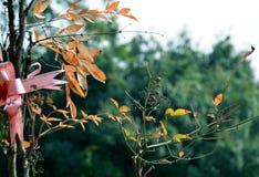 Andedräkten av hösten Arkivfoto