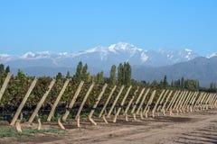 Anden-Gebirgszug, in der Argentinien-Provinz von Mendoza Lizenzfreies Stockfoto