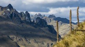 Anden. Nationalpark Cajas, Ecuador lizenzfreie stockfotografie