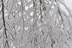 Andere nahes viee des Schnees in den Niederlassungen des Baums Stockfotos