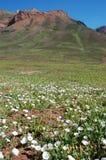 Anderna berg, Argentina Arkivbilder