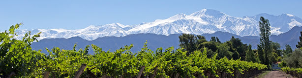 Anderna & vingård, Lujan de Cuyo, Mendoza Royaltyfria Foton