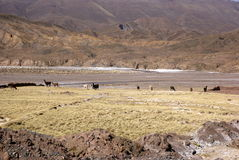 Andes and atacama desert, Uyuni, Bolivia Royalty Free Stock Images