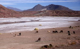 Andes and atacama desert, Uyuni, Bolivia Stock Photos