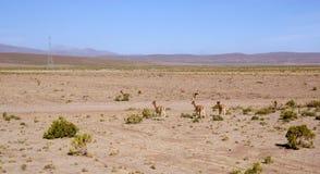 Andes and atacama desert, Uyuni, Bolivia Stock Images