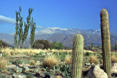 Andes Landscape Royalty Free Stock Photos