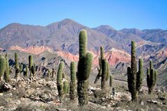 Andes landscape Stock Photography