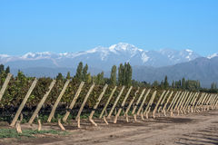 Andes mountain range, in the Argentine province of Mendoza Royalty Free Stock Photo