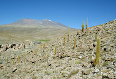 Andes Mountains, Chile royalty free stock images