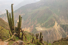 The Andes in Peru. Near the city of Cusco Royalty Free Stock Photo