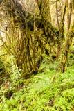 Andes Rainforest Vegetation Royalty Free Stock Photos