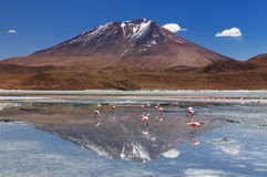 Andes in South America Stock Images