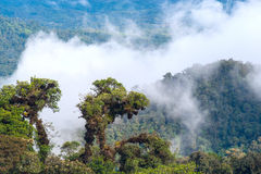 From Andes to Amazon, Ecuador. From Andes to Amazon, View of the tropical rainforest, Ecuador stock photos