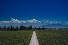 Andes view with Vinewyards and Road in Mendoza, Argentina Stock Photo