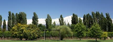 Andes & Vineyard, Lujan de Cuyo Royalty Free Stock Image