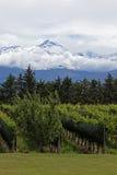 Andes & Vineyard, Uco Valley, Mendoza Stock Image