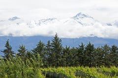 Andes & Vineyard, Uco Valley, Mendoza Royalty Free Stock Photography