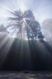 Andeträd Royaltyfria Foton