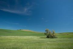 Andf зеленой травы пшеничное поле Стоковое фото RF