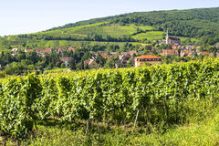 Andlau (Alsace) - Vineyards Royalty Free Stock Image