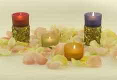 Andles und aromatischer Roseurlaub Lizenzfreie Stockfotos