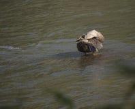 Andlokalvård själv på vatten Arkivfoton