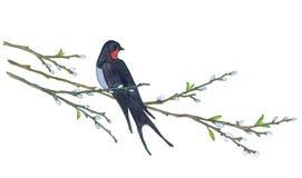 Andorinha na árvore de salgueiro Ilustrações desenhadas mão Foto de Stock