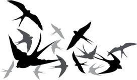Andorinhas do voo da silhueta em um fundo branco ilustração stock