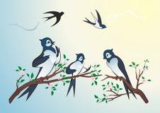 Andorinhas dos pássaros Fotos de Stock