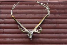 Andouillers d'antilope photo libre de droits