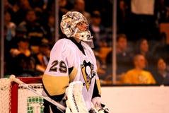 andre pingwiny Mark pingwiny Pittsburgh Zdjęcia Royalty Free