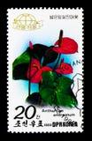 Andreanum dell'anturio del fiore di fenicottero, serie delle piante, circa 1989 Fotografia Stock Libera da Diritti