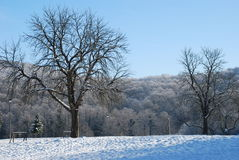 Andrevlje park et winter royalty free stock images