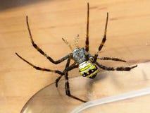 andrew przecinający pająka st Obraz Royalty Free