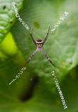 andrew przecinający s pająka st Obrazy Royalty Free