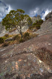 Andringitra. Nature reserve in Madagascar Royalty Free Stock Images