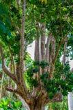 Andromeda Botanic Gardens, Barbados, das caraíbas Fotos de Stock