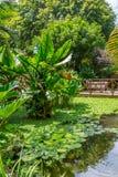Andromeda Botanic Gardens, Barbados, das caraíbas Imagem de Stock Royalty Free