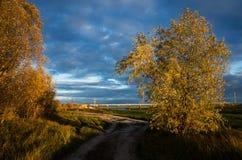 Andscape: δέντρα με το κίτρινο φύλλωμα στοκ φωτογραφία με δικαίωμα ελεύθερης χρήσης