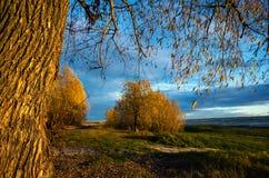 Andscape: δέντρα με το κίτρινο φύλλωμα στοκ εικόνα
