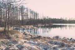 andscape με τις παγωμένες εγκαταστάσεις και τον τρύγο hoar-παγετού effe Στοκ Εικόνα