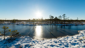Andscape με τις παγωμένες εγκαταστάσεις και το hoar-παγετό Στοκ Φωτογραφίες