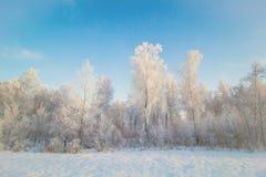 Andscape με το δάσος σημύδων Στοκ Εικόνα