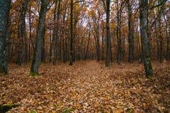 Andscape με το δρύινο δάσος Στοκ Φωτογραφίες