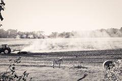 Andscape με το συγκομισμένο τομέα και το άσπρο άλογο Στοκ Εικόνες