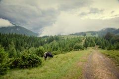 Andscape στα Καρπάθια βουνά Στοκ φωτογραφίες με δικαίωμα ελεύθερης χρήσης