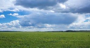 Andscape-Natur-Grasbaumwolken stockfotos